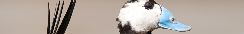 Rutas ornitológicas 1