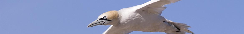 Rutas ornitológicas 6