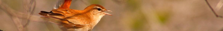 Rutas ornitológicas 7